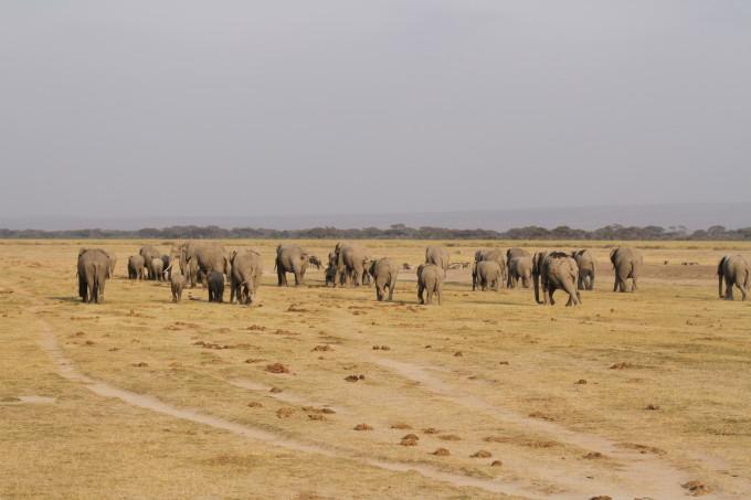 肯尼亚动物大迁徙之旅