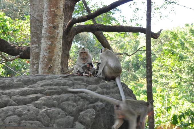 难怪宝宝说像野生动物园