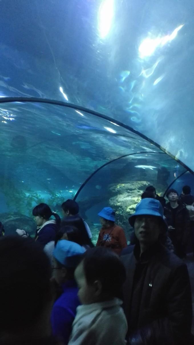 【上海长风海洋世界】鲨鱼来啦