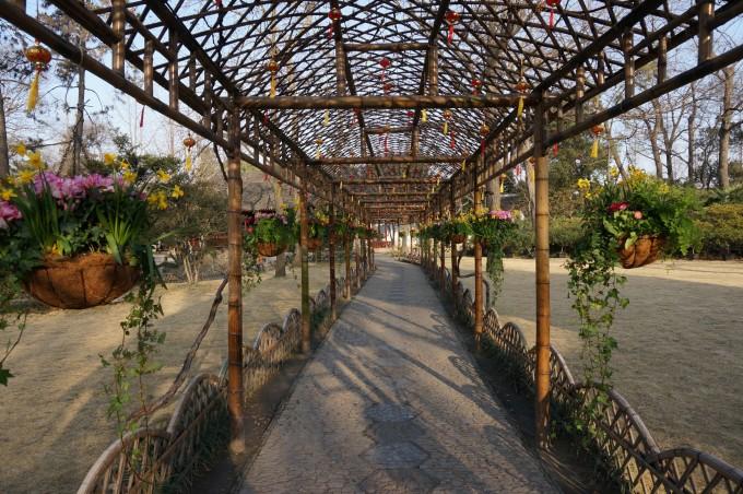 春节去苏州感受小调调吧——苏州,扬州4日游(狮子林,拙政园,虎丘,个园