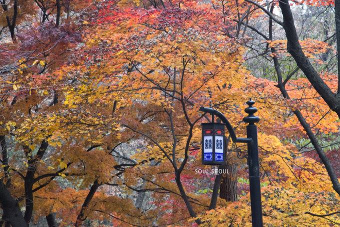 --> 对韩国了解甚少 会去首尔是因为kiwi在韩读书不追星,不整容 我还想去看秋天和冬天。 看着厦门没什么变化的秋天一天天过去 关注的泡菜国秋枫一天天变红 好担心11!20!赶不上看红叶 也担心12!5!来不及看白雪 (真是超级幸运的抓住秋天的小尾巴,又看到初雪!) 感谢天儿儿儿儿儿儿 赐予我神奇的能力 让我什么都遇到了~ 本想着,kiwi来韩3个月 差不多能成为优秀的地头蛇了 不过 我忘了一件很重要的事儿 我这么不清楚 怎么会有清楚的东森 幸好我临行前有做了点功课 于是 带着我老母亲 勇敢地 向首尔