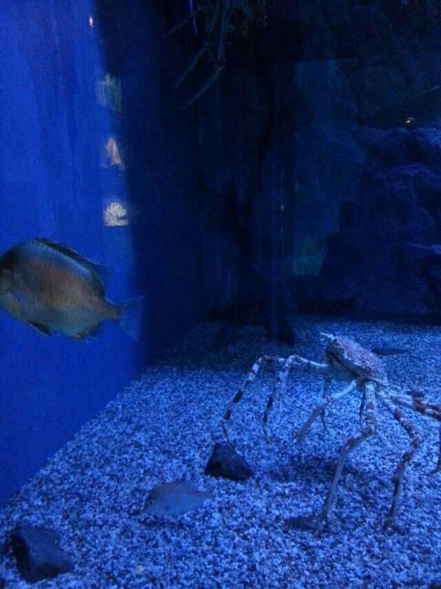 壁纸 海底 海底世界 海洋馆 水族馆 桌面 640_854 竖版 竖屏 手机