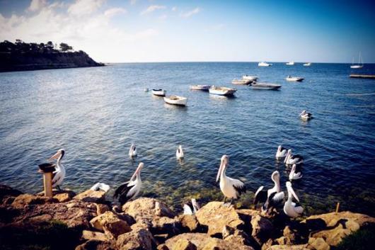 袋鼠岛英文精华一日游(每天发团 海豹湾 旗舰拱门 神奇岩石 汉森湾