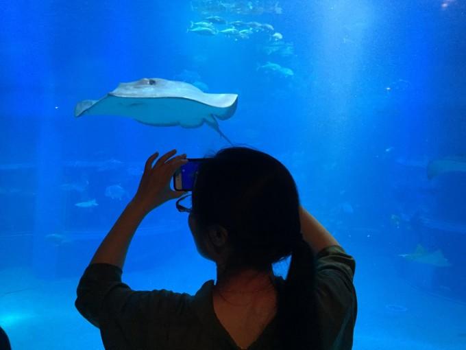 壁纸 动物 海底 海底世界 海洋馆 鲸鱼 水族馆 680_510
