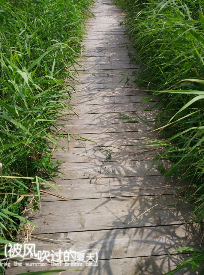 第五天 松鹤西湖公园 普陀山风景区 溪水森林公园 木雕 石苑