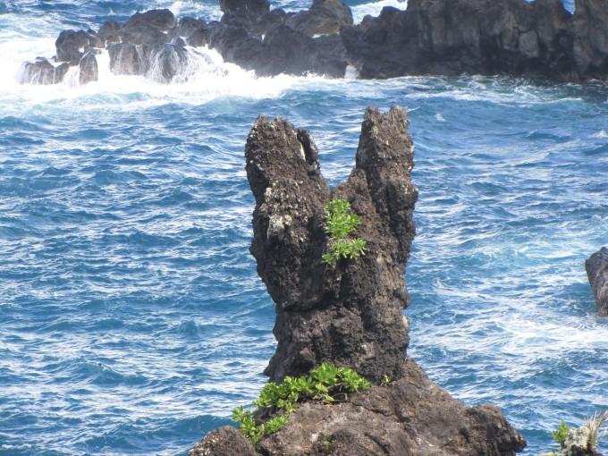 真是匪夷所思,要知道夏威夷群岛周围几千miles没有任何陆地,连个珊瑚