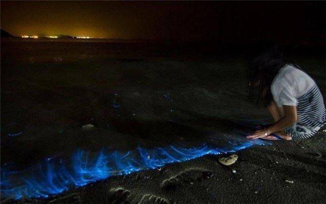 寻找蓝眼泪之伯沙,诗巫双岛之旅