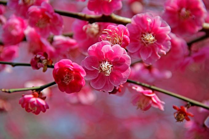 春天的花——福建 苏州 北京 蔚县