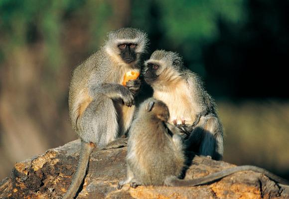 狮虎园为威海神雕山野生动物园的第一个游览园区