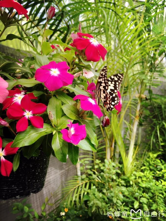 花漾年华--普吉,清迈,普吉岛旅游攻略 - 蚂蜂窝