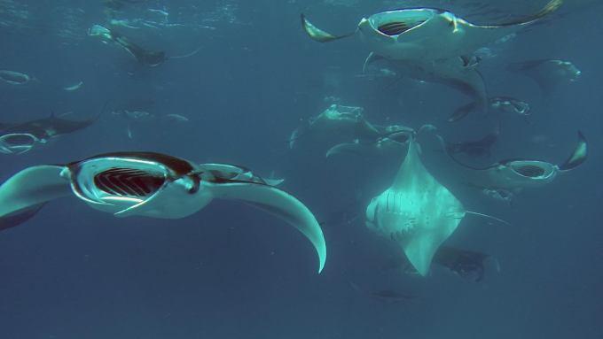 马尔代夫芭环礁暴走都喜天阙+finolhu+阿米拉实用