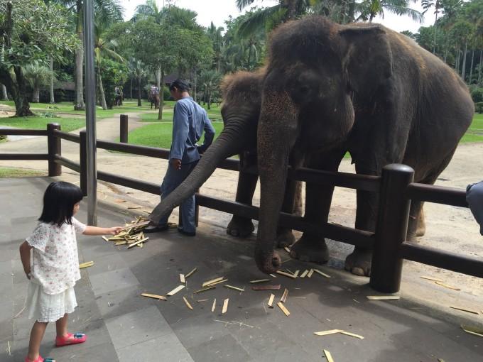 大象野生动物园