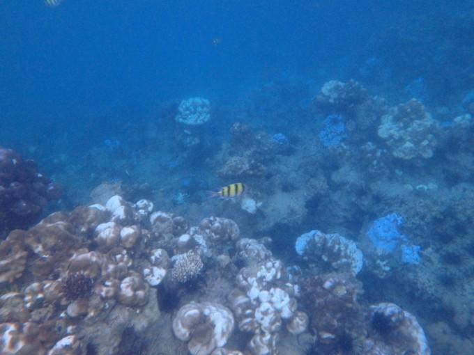 沉迷海水和海滩--泰国海岛游(四):丽贝岛