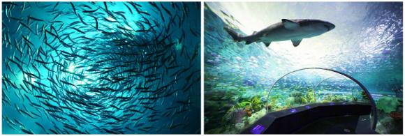 穿过危险湖中的海底隧道,并近距离欣赏水族馆最可怕的动物,包括鲨鱼