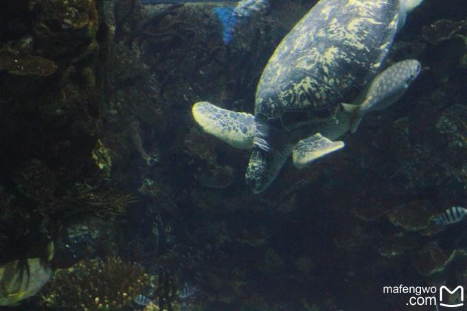 北京-海洋世界动物园